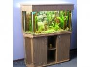 Akvarium-v-gostinnoj