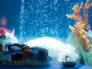 Dekorativnyj-akvarium