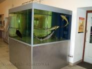 Dlja-prodazhi-ryby