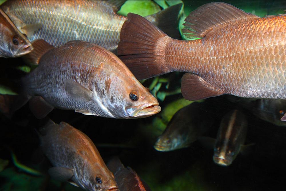 Akvariumy-dlja-supermarketov